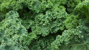 Photo From: Kale and Cannellini Beans